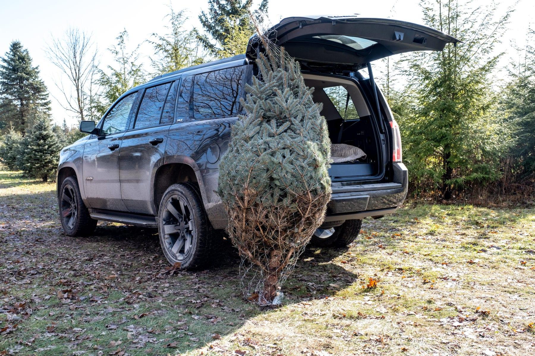 2019 GMC Yukon Christmas tree